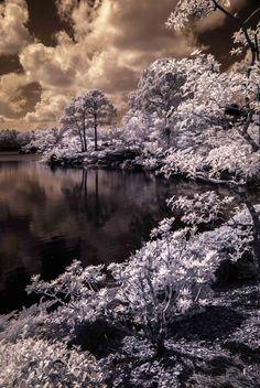 Florida - Ellie Perla - Infrared Photography #ellieperla