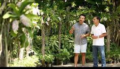 The Gardener คนรักสวน พาชม The Blooms Orchid Park