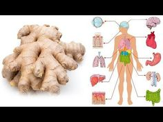 The History and Biochemistry Of Ginger.The Therapeutic Effects Of Ginger.The Most Effective Doses Of Ginger.The Side Effects And Potential Drug Interactions Of Ginger. Ginger Benefits, Health Benefits, Effects Of Ginger, Spine Health, Types Of Arthritis, Fitness Tattoos, Best Disney Movies, Viking Tattoo Design, Travel Activities