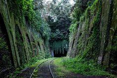 Tunnel Train Tracks, Forest Train, Digital Backdrop, Background, Digital…