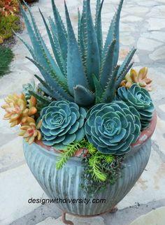 Photo Succulent Seeds, Succulent Gardening, Planting Succulents, Planting Flowers, Potted Plants, Succulent Planters, Succulent Display, Garden Planters, Cactus Plants