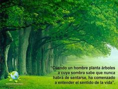 When a man plant trees whose shade he knows he shall never to sit under it, has begun to understand the sense of life. #Arbol #Bosque #Ecologismo