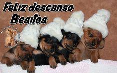 Feliz descanso. Besitos Dogs, Animals, Kisses, Be Nice, Animaux, Doggies, Animal, Animales, Pet Dogs
