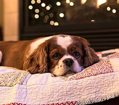 Blue Buffalo | Safely Celebrate the Holidays with Your Pet