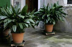 Le mostramos las 12 mejores plantas para decorar espacios poco iluminados - e-Consejos