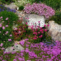 Beautiful rock garden