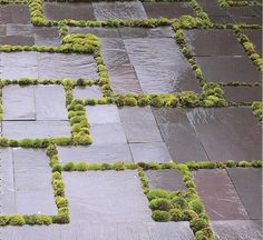 Planting between paving. Concept landscapes / moss / stone / / repinned on Toby Designs