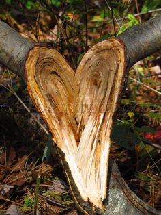 Hearts in Nature » Nicki Steel Photography