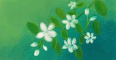 7 Amazing Benefits Of Jasmine Oil For Skin, Hair, And Health