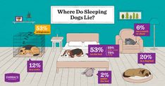 Where do sleeping dogs lie? Embrace got answers from over dog owners. Embrace Pet Insurance, Pet Health Insurance, Dog Cuddles, Sleepy Dogs, Pet Names, Photo Contest, Dog Bed, Dog Owners, Dogs And Puppies