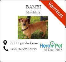 Bambi/Mischling/vermisst