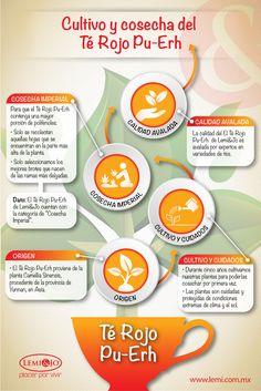 Infografía: Cultivo y cosecha del Té Rojo Pu-Erh.  #salud #belleza #bienestar #infografia