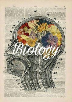 Biology lab binder