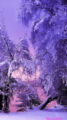 Merry Christmas & Happy New Year ! Pastel Purple, Purple Haze, Shades Of Purple, Deep Purple, Winter Scenery, Winter Colors, Purple Christmas, Merry Christmas, Fantasy Forest