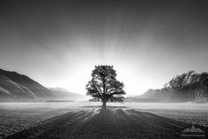 This solitary tree, backlit against a fantastic mountain-scape really captures the imagination. With an ethereal quality and the drama of the strong lighting makes for a truly captivating image. After the initial wow the viewer can lose themselves in the fine level of detail in the artwork.  Landscape photo print for sale taken by photographer Anthony Turnham at Hororata, Canterbury, New Zealand.