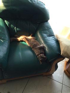 Relaxing kitten...