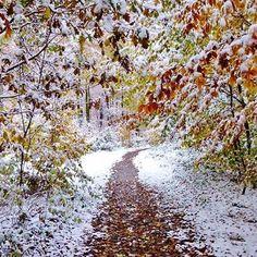 【sarah.fimu】さんのInstagramをピンしています。 《#autumn #invierno #winter #冬 #겨울 #snow #schnee #nieve #neige #雪 #눈 #natur #nature #naturista #naturaleza #自然 #자연 #wald #forest #bosque #selva #foret #森林 #숲 #woods #herbst #otono #日 #태양 #sunshine》