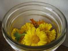 How to Make Homemade Calendula Extract http://herbsandoilshub.com/how-to-make-homemade-calendula-extract/  Everything you need to know to create a double or triple strength calendula extract.