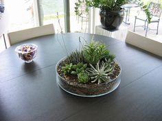 Love bringing the outside in...especially on my dining room or breakfast table!