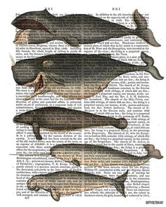Five Vintage Whales  Whale print nautical print by DottyDictionary, $15.00