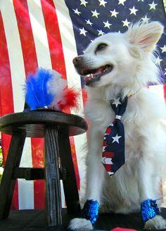 Sew DoggyStyle: Star Spangled Cuffs - A Tutorial DIY Dog Clothes