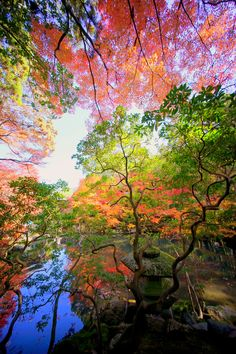 やっぱ京都の紅葉はきれかった / αcafeソニー #京都 #紅葉 #Kyoto #Autumn Beautiful World, Beautiful Places, Beautiful Pictures, Colorful Trees, Flowering Trees, Ciel, Belle Photo, Wonders Of The World, Nature Photography
