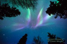 Nightingale, aurora borealis photo from Alaska