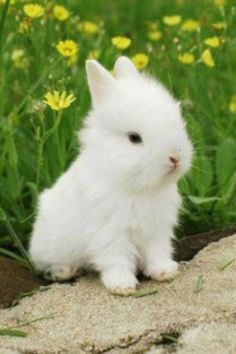it looks likes a dog with big ears but it is so cute i can not resist it.