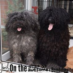 """""""All us #hungarianpuli owners know this is true ❤️❤️#@Over #ExcitingWords #models #dreadlock #tongues ##petstagram #petsofinstagram #Pets_of_the_World…"""""""