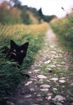 Crossing a black cat on a path :)
