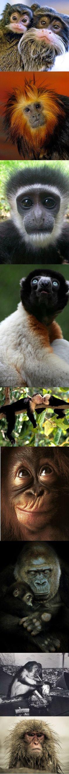 monkeys monkeys monkeys