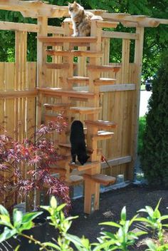 1000 Images About Outdoor Cat Stuff Enclosures Window