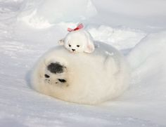 ♥ The Cutest Monthly Kawaii Subscription Box ♥ Receive cute items from Japan & Korea every month ♥ Cute Little Animals, Cute Funny Animals, Funny Cute, Cute Seals, Fluffy Cows, Seal Pup, Cute Friends, Beautiful Creatures, Pet Birds
