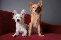 Roxy & Riley  #patients #nfah #animallovers #petgallery