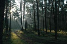 Promienisty las