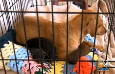 For two week, 13 dogs and 3 puppies fended for themselves. Neighbors left food and water for the animals, but they couldn't properly care for all pets.