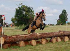 Ferdinand - Part Arab Buckskin Gelding by must love horses, via Flickr