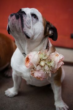 Can't resist pinning this pup! @Damsel In Dior. Adorable! Bride's blog (Jaycey Duprie is here: http://www.jaceyduprie.com) Photography by laurenrossphoto.com, Floral Design by hollyflora.com