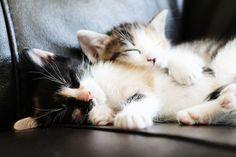 Sweet sleeping kittens