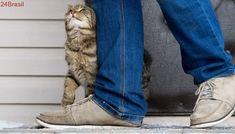 Clique Ciência | Por que os gatos se esfregam nas coisas e nas pessoas?