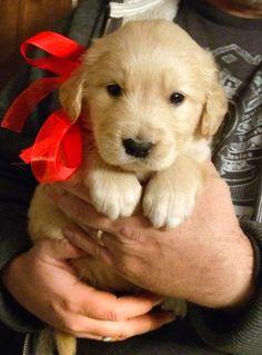 I want him for Christmas! @jojoinfinity