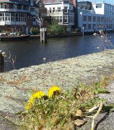Schie Aelbrechtskade  foto: Heleen van ZantvoortHeleen Rotterdam, River, Outdoor, Outdoors, Outdoor Games, The Great Outdoors, Rivers