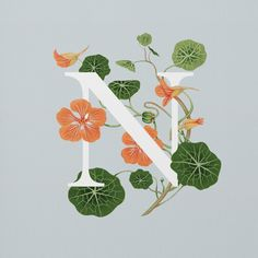 Nasturtium. AN EDIBLE A–Z OF FLOWERS. Exploring the fascinating range of edible flowers, this illustrated alphabet combines strong typography with delicate gouache artwork. Influenced by botanical studies and children's educational wall charts this collection offers anyone the opportunity to discover familiar and unfamiliar florals that look just as good on a plate as they do outdoors. www.flowerstoeat.co.uk #typography #letters