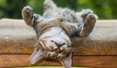 Lekker een dutje op de rug doen! #cat #fun #lovely #LandIdee www.landidee.nl Foto: Shutterstock