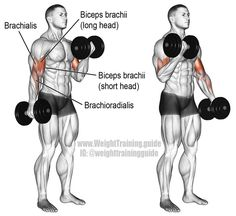 An isolation exercise. Synergists: Brachialis, and Brachioradialis. Few exercises are as popular as the dumbbell curl! Use it to build and strengthen your biceps brachii, brachialis, and brachioradialis. Dumbbell Bicep Workout, Forearm Workout, Big Biceps, Back And Biceps, Biceps Curl, Mens Fitness, Fitness Tips, Fitness Motivation, Lifting Motivation