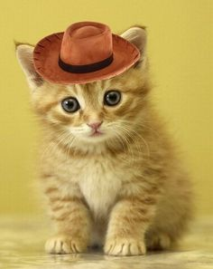 animals wearing hats - Google Search