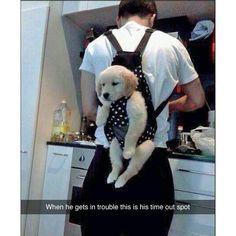 I promise I'll be good #yizzam #dog #puppy #funny #joke #laugh  #animal #fur…