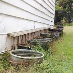 Copper Kettles kill mosquito larvae.  collect rain water in copper kettles.