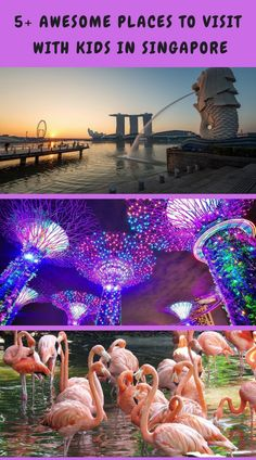 Are you wondering what there is to do in Singapore with kids? Read our travel guide to learn what activities to do downtown like the ArtScience Museum, what hotel has Gardens by the Bay that you can explore, and where to find Chinatown! #familytravel #adventure #singapore #asia #familyvacation Singapore Travel Tips, Singapore Itinerary, Travel With Kids, Family Travel, Popular Holiday Destinations, Travel Destinations, Backpacking Asia, Travel Reviews, Best Cities