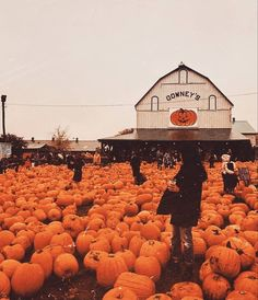 Autumn Cozy, Fall Winter, Autumn Witch, Photo Harry Potter, Autumn Aesthetic, Spooky Scary, Fall Wallpaper, Fall Pictures, Fall Photos